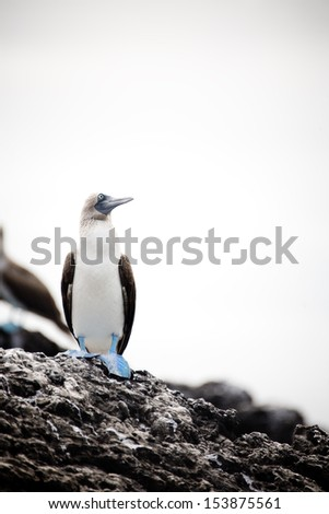 Galapagos Island - stock photo