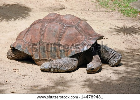 Galapagos Turtle - stock photo