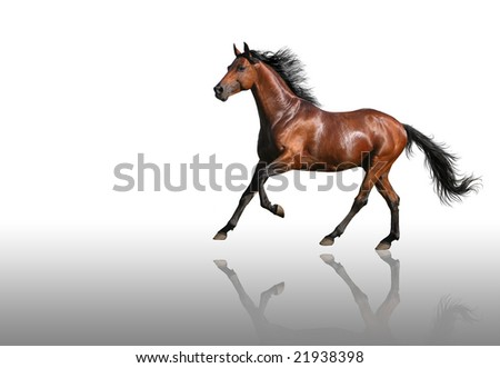 gallop horse-isolated on white - stock photo
