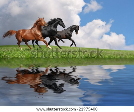 gallop horses - stock photo