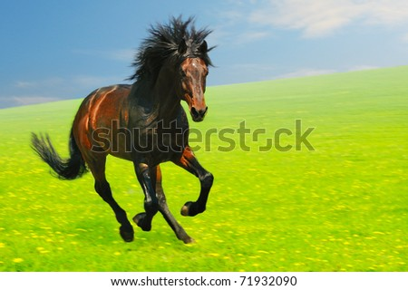 Galloping bay horse in field, motion blur