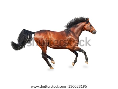 galloping bay sportive breed  horse isolated on white - stock photo
