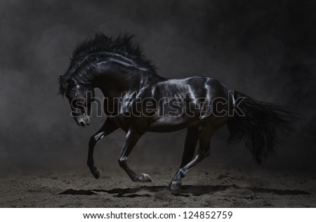 Galloping black horse on dark background - stock photo