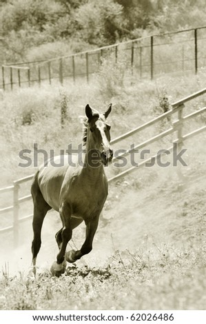 Galloping horse on the ranch - stock photo
