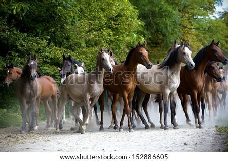 Galloping horses at pasture - stock photo