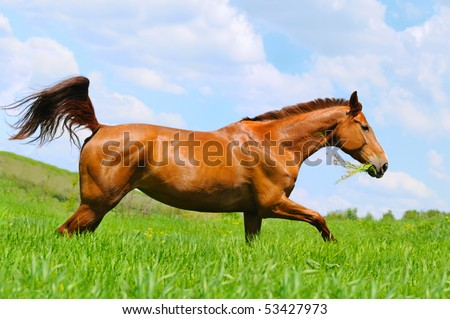 Galloping sorrel horse in field