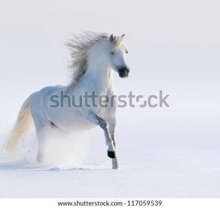 Galloping white horse on snow field - stock photo