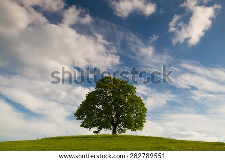 Gallows Hill - Memorial maple tree on the mystic place in Votice, Czech Republic