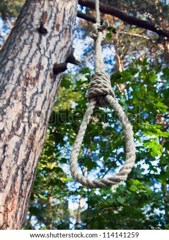 gallows on a tree in a forest - stock photo