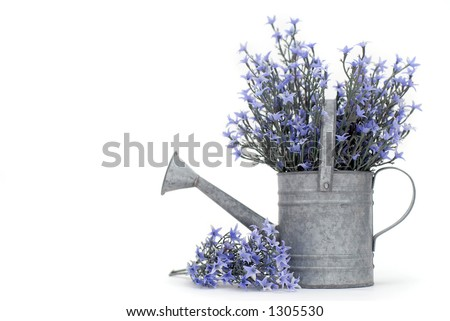 Galvanized Watering Pot Filled with Purple Flowers (room for text) - stock photo