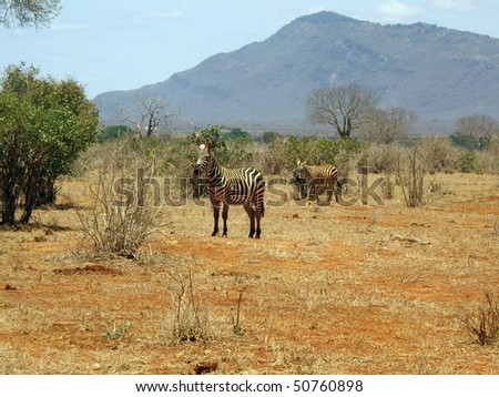 Game Park view with zebra and mountain