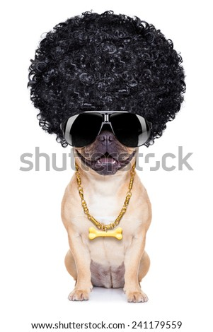 gangster cool afro dog wit gold chain and sunglasses, isolated on white background - stock photo