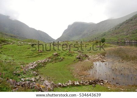 Irish Moss Stock Images Royalty Free Images Amp Vectors