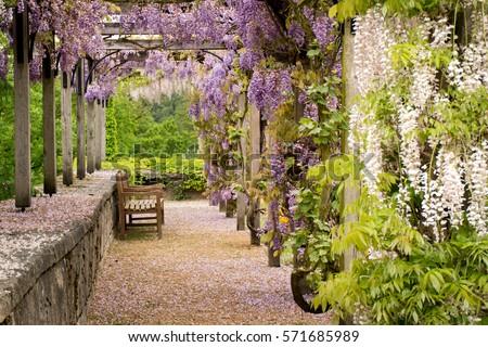 garden - Garden