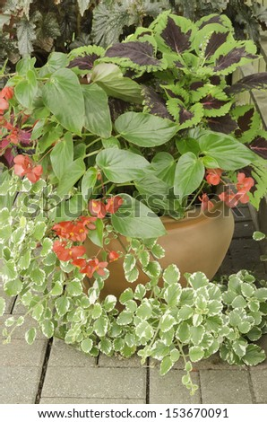 Garden arrangement with several kinds of foliage, including coleus - stock photo