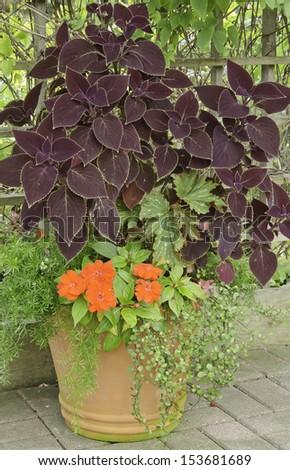 Garden arrangement with variety of plants, including coleus, in summer - stock photo