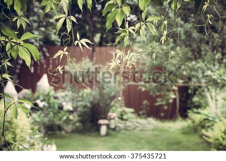 Garden background with hanging vines - stock photo