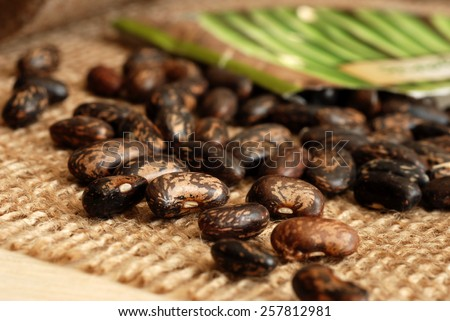 Garden bean seeds spilling from packet onto burlap.  Macro with shallow dof / selective focus.  (specific seed variety - organic tendergreen bush beans) - stock photo