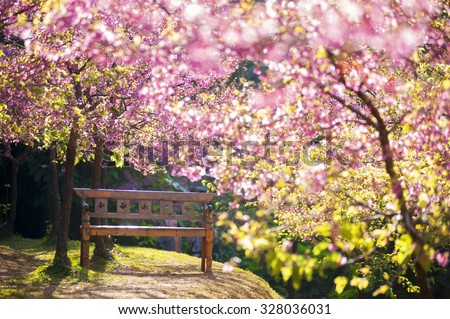 garden bench under the Pink sakura, blur style - stock photo