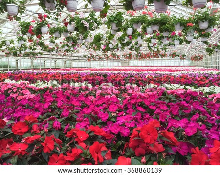 Garden center. Colorful variety of flowers in a greenhouse.