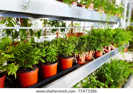 Garden center with rows of flowers in pots - stock photo