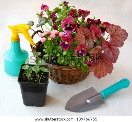 Garden composition of ornamental flowers in a basket, sprayer and shovel on the table