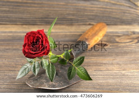 Garden concept still life with rose and gardener's trowel in rustic style on wooden background.
