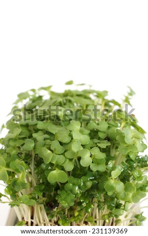 Garden cress in close up on a white background with copy space - stock photo