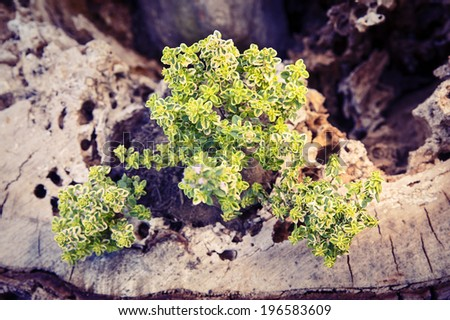garden flower - stock photo