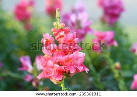 Garden Flower Background - stock photo