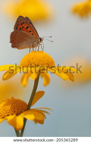 Garden flower with butterfly - stock photo