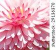 Garden flowers - stock photo