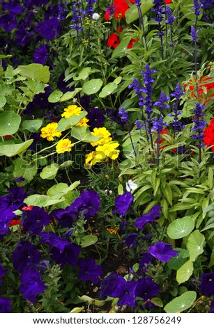 Garden Flowers. - stock photo