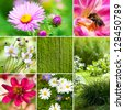 Garden flowers collage - stock photo