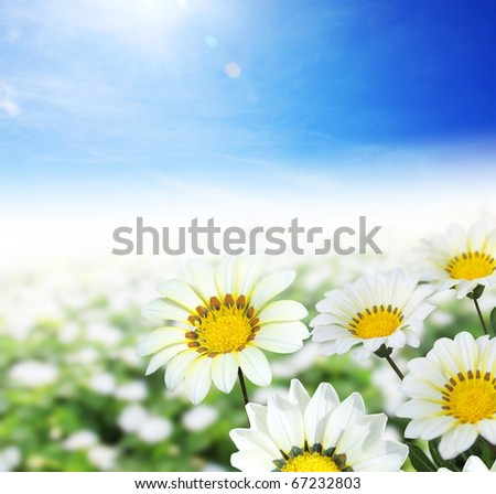 Garden flowers in holiday - stock photo