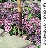 Garden Fork in flower bed - stock photo