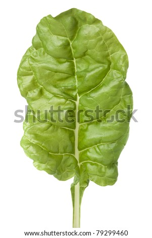 Garden fresh Swiss chard (silverbeet) leaf on white with clipping path - stock photo