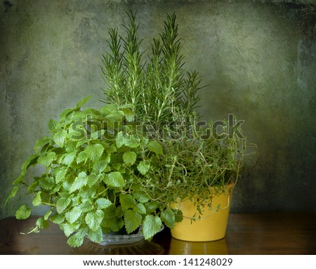Garden herbs to spice up the cuisine: mint, thyme, rosemary - stock photo