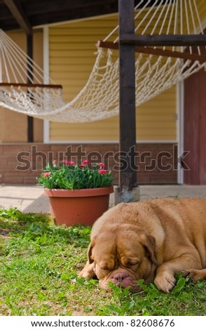 Garden house, hammock and sleeping dog in summer sunny day - stock photo