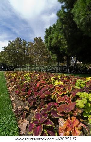 Garden in Barcelona - stock photo