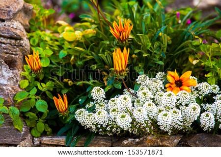 Garden in Corte, Corsica, France - stock photo