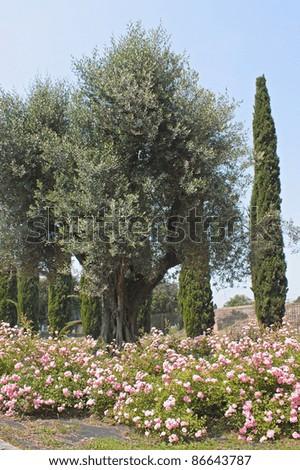 Garden in the roman forum, Rome, Italy - stock photo