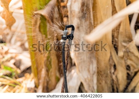 Garden irrigation system watering lawn ; water sprinkler head - stock photo