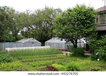 Garden Land Growing Their Own Hands Fresh Vegetables, Fruits, Herbs