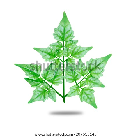 garden leaves on white background - stock photo
