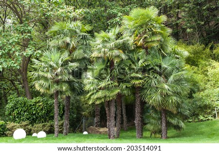 Garden of a villa; forest with palm trees in the foreground