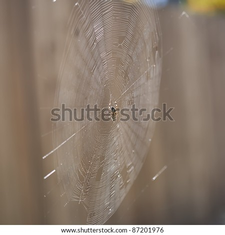 Garden orb weaver spider and its prey - stock photo