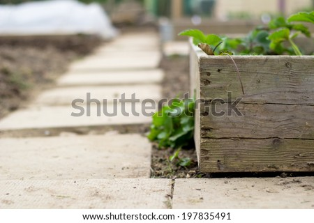 Garden path and planter - stock photo