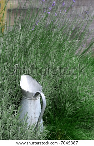 Garden Pitcher - French watering-can surrounded with culinary herbs. - stock photo