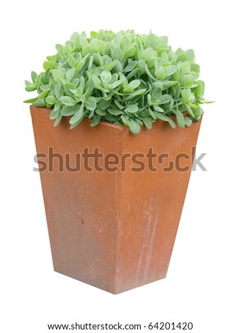 Garden Planter with succulent plant isolated with clipping path - stock photo